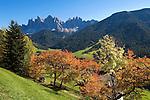 Italy, South Tyrol, Alto Adige, Dolomites, Val di Funes: autumn colours, Le Odle mountains at natural park Puez-Odle