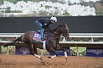 DEL MAR, CA - NOVEMBER 01: Carina Mia, owned by Three Chimneys Farm LLC and trained by Chad C. Brown, exercises in preparation for Breeders' Cup Filly & Mare Sprint  during morning workouts t Del Mar Thoroughbred Club on November 1, 2017 in Del Mar, California. (Photo by Anna Purdy/Eclipse Sportswire/Breeders Cup)
