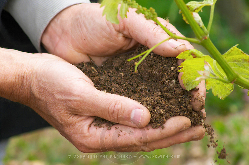 The then chief winemaker and director of Chapoutier, Alberic Mazoyer holding in his scooped hands a soil sample to demonstrate its qualities  In the vineyard Le Pavillon of M Chapoutier on the Hermitage hill, sandy and pebbly soil.   Domaine M Chapoutier, Tain l'Hermitage, Drome Drôme, France Europe