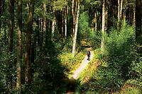 A walker on the West Highland Way near Rowardennan, Loch Lomond and the Trossachs National Park