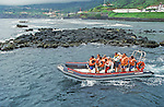 whale watching boat starting from Lajes do Pico  harbour