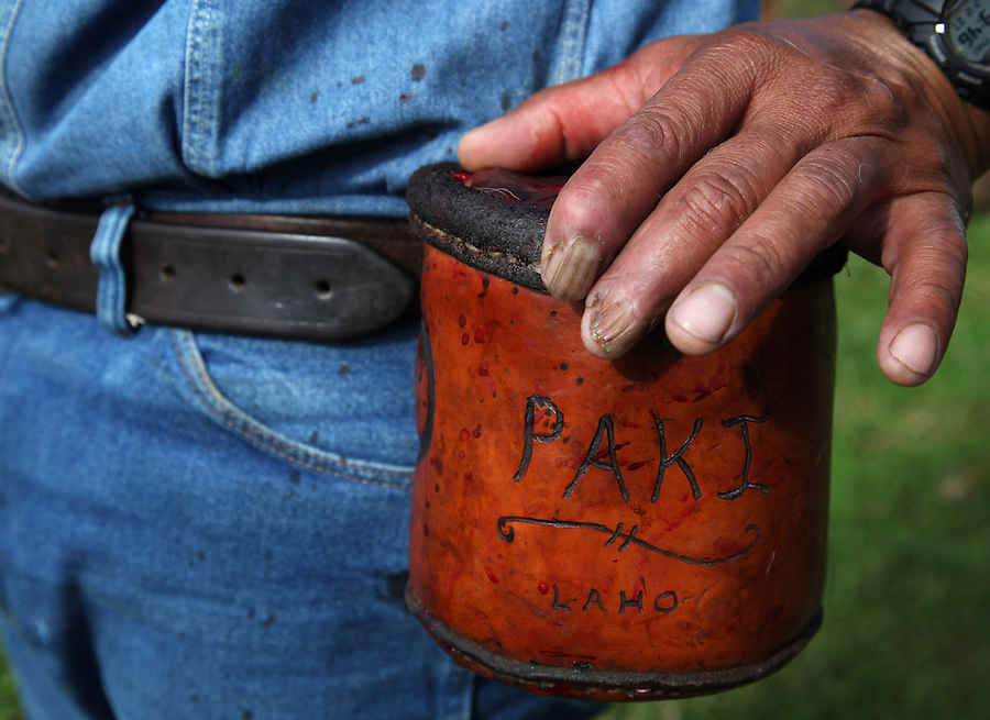"""Bernard Ho'opai, who comes from a four generation paniolo family, puts his hand on the leather pouch where he places calf testicles or """"laho"""" while castrating calves at Ponoholo Ranch in North Kohala, Hawaii.  The """"laho"""" are later cleaned and cooked with garlic salt and oil directly over the branding fire and eaten as a delicacy.  Like many of the cowboys, Ho'opai has suffered many injuries over the years including damaged fingers and nails."""