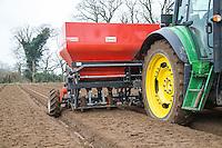 Planting onion sets - Norfolk, February
