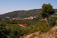 Vineyard.  The Tsantalis sponsored monastery. Mount Athos. Tsantali Vineyards & Winery, Halkidiki, Macedonia, Greece. Metoxi Chromitsa of St Panteleimon monastery.