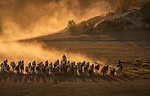 Horses kick up huge clouds of dust as they charge over grassy plains at sunset.  The Mongolian breed are thought to outnumber people in the Asian country, and have remained largely unchanged since the times of Genghis Khan.<br /> <br /> These captivating action shots were taken in the hills of Wulanbutongxiang in neighbouring China, by property investor Jennifer Lu.  SEE OUR COPY FOR DETAILS.<br /> <br /> Please byline: Jennifer Lu/Solent News<br /> <br /> © Jennifer Lu/Solent News & Photo Agency<br /> UK +44 (0) 2380 458800