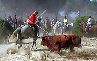A man on horseback thrusts his lance into the bull during the 'El toro de la Vega' (The bull of the plain) bullfight, 13 September 2005 in Tordesillas. On the second Tuesday of September, since the fifteenth century the village has celebrated this very special bullfight. The arena of the bullfight is the plain across the river from the village and it is up to a number of young men with lances to dispute the honour of making the fatal strike. (c) Pedro ARMESTRE