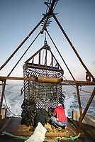 scallop fishing, Cousins Island, Maine, USA, Atlantic Ocean
