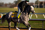November 2, 2020: Tacitus, trained by trainer William I. Mott, exercises in preparation for the Breeders' Cup Classic at Keeneland Racetrack in Lexington, Kentucky on November 2, 2020. Carolyn Simancik/Eclipse Sportswire/Breeders Cup