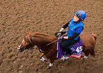 DEL MAR, CA - NOVEMBER 02: Wuheida, owned by Godolphin Stable Lessee and trained by Charlie Appleby, exercises in preparation for Breeders' Cup Filly & Mare Turf at Del Mar Thoroughbred Club on November 2, 2017 in Del Mar, California. (Photo by Sue Kawczynski/Eclipse Sportswire/Breeders Cup)