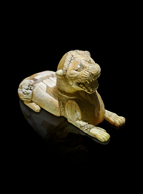 Phrygian ivory statuette carved as a roaring lion lying down from a table base decoration. From Gordion. Phrygian Collection, 8th-7th century BC - Museum of Anatolian Civilisations Ankara. Turkey. Against a black background