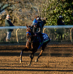 November 4, 2020: Donjah, trained by trainer Henk Grewe, exercises in preparation for the Breeders' Cup Turf at Keeneland Racetrack in Lexington, Kentucky on November 4, 2020. Scott Serio/Eclipse Sportswire/Breeders Cup