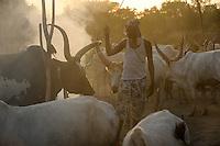 Afrika SUED-SUDAN  Bahr el Ghazal region , Lakes State, Dinka mit Zeburindern im cattle camp /<br /> Africa SOUTH SUDAN  Bahr al Ghazal region , Lakes State, cattle camp