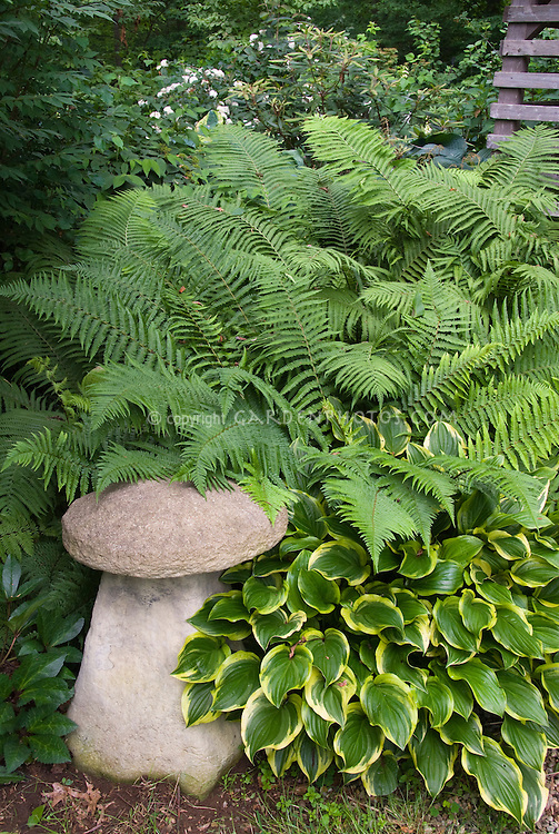 Garden ornament mushroom with hosta and ferns in shade
