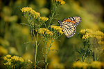 10.17.14 - Profile of a Butterfly...