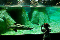 A child watches in wonder at a seal (otariids) swimming in a display tank at The North Carolina Zoo, located in the town of Asheboro, North Carolina. The North Carolina Zoo, located about 70 miles west of Raleigh and about 90 miles from Charlotte, is one of the largest natural habitat zoos in the United States that allows visitors to walk through its grounds. One of only two state-supported zoos in the country, the NC Zoo was the first American zoo to incorporate the natural habitat philosophy, which presents animals and plants together in exhibits that resemble the natural habits of these creatures in the wild. The North Carolina Zoological Park features animals from Africa and North America. The 1,500-acre  zoo is located atop Purgatory Mountain, which is part of the Uwharrie Mountains in central North Carolina.
