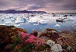 Icebergs from the Breiðamerkurjökull Glacier, Jökulsárlón, Iceland