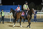 March 25, 2021: Gold Cup contender Mekong (GB) trains on the track for trainer Jamie Osborne at Meydan Racecourse, Dubai, UAE.<br />