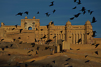 Birds at sunrise and the Jaipur Amber Fort Rajasthan, India