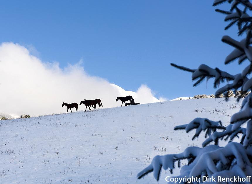 Pferdeherde im  Kirgisischen Alatau bei Ala Archa, Kirgistan, Asien<br /> horses in the Kirgisian Alatau mountains near Ala Archa, Kirgistan, Asia