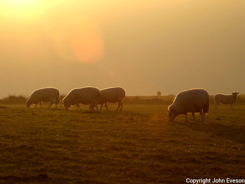 Cumbria view, sheep and sunset near Greystoke, Lake District.