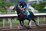 SHA TIN,HONG KONG-APRIL 30: Bow Creek ,trained by John O'Shea ,exercises in preparation for the Champions Mile at Sha Tin Racecourse on April 30,2016 in Sha Tin,New Territories,Hong Kong (Photo by Kaz Ishida/Eclipse Sportswire/Getty Images)
