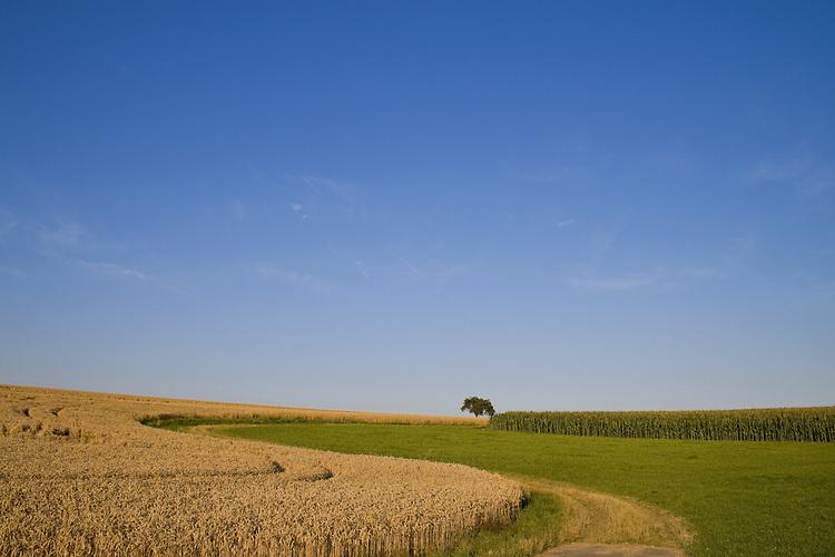 Europa, DEU, Deutschland, Rheinland Pfalz, Mittelrhein, Loreley, Reitzenhain, Agrarlandschaft, Getreide, Anbau, Feld, Acker, Sommer, Baum, Kategorien und Themen, Agrar, Agrarwirtschaft, Landwirtschaft, Landwirtschaftlich, Natur, Naturfoto, Naturfotos, Naturfotografie, Naturphoto, Naturphotographie, Landschaft, Landschaften, Landschaftsfoto, Landschaftsfotografie, Landschaftsphoto, Landschaftsphotographie......[Fuer die Nutzung gelten die jeweils gueltigen Allgemeinen Liefer-und Geschaeftsbedingungen. Nutzung nur gegen Verwendungsmeldung und Nachweis. Download der AGB unter http://www.image-box.com oder werden auf Anfrage zugesendet. Freigabe ist vorher erforderlich. Jede Nutzung des Fotos ist honorarpflichtig gemaess derzeit gueltiger MFM Liste - Kontakt, Uwe Schmid-Fotografie, Duisburg, Tel. (+49).2065.677997, ..archiv@image-box.com, www.image-box.com]