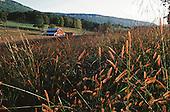 Pasture in valley