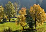 DEU, Deutschland, Bayern, Niederbayern, Naturpark Bayerischer Wald, Herbstlandschaft   DEU, Germany, Bavaria, Lower-Bavaria, Nature Park Bavarian Forest, autumn landscape