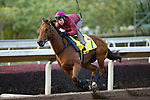 SHA TIN,HONG KONG-DECEMBER 08 : Not Listening'tome,trained by John Moore,exercises in preparation for the Hong Kong Sprint at Sha Tin Racecourse on December 8,2017 in Sha Tin,New Territories,Hong Kong (Photo by Kaz Ishida/Eclipse Sportswire/Getty Images)