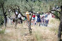 Team Deceuninck-Quickstep at the front of the peloton<br /> <br /> Stage 17: Pont du Gard to Gap(206km)<br /> 106th Tour de France 2019 (2.UWT)<br /> <br /> ©kramon