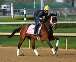 April 21, 2014  Aurelia's Belle and rider Calamity Compton gallop at Churchill Downs.  She recently won the Bourbonette Oaks for trainer Wayne Catalano and owner James F. Miller.