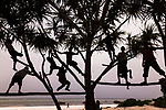 Children at play<br /> Zanzibar, Tanzania<br /> As I approached these kids playing in a palm by the beach, they stopped stood upright on the limbs looking at me.  I moved away and photographed them from a distance.  They resumed their antics which provides all the interest--the gestures and the movement.