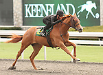 07 April 2011.  Hip #125 SIEMPRE SEDOSA  Ghostzapper - Crystal Symphony filly, consigned by Niall Brennan.