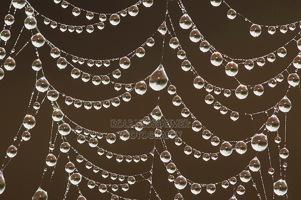 Dew covered Spider web, Sinton, Corpus Christi, Coastal Bend, Texas, USA