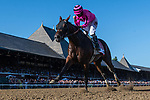 August 14, 2021: High Oak #11, ridden by jockey Junior Alvarado wins the Saratoga Special (Grade 2) for two-year-olds at Saratoga Race Course in Saratoga Springs, N.Y. on August 14, 2021 Rob Simmons/Eclipse Sportswire/CSM