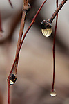 Early morning droplets of dew in the Rajasthani desert.
