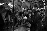 Europe/France/Centre/Indre-et-Loire/ Sepmes: Sébastien Beaury lors de la traite de ses chèvres de la Ferme: Le Cabri au lait de  Sébastien Beaury & Claire Proust, Ferme pédagogique,  Eleveurs caprins, Fromagers producteurs de fromages bio : AOP Sainte-Maure de Touraine  //France, Indre et Loire, Sepmes: SSébastien Beaury during milking his goats Farm: The Cabri milk Sébastien Beaury & Claire Proust, Educational farm, goat breeders, producers of organic cheeses Cheese: AOP Sainte-Maure de Touraine<br /> - Auto N: 2013-128
