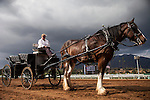 September 27 2014: Scenes from Breeders Cup Preview Day at Santa Anita Park in Arcadia CA. Alex Evers/ESW/CSM