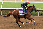 DEL MAR, CA - NOVEMBER 01: Giant Expectations, owned by Exline - Border Racing LLC & Gatto Racing LLC and trained by Peter A. Eurton, exercises in preparation for the Breeders' Cup Las Vegas Dirt Mile at Del Mar Thoroughbred Club on November 1, 2017 in Del Mar, California. (Photo by Sue Kawczynski/Eclipse Sportswire/Breeders Cup)