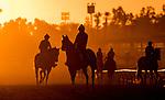 October 20, 2018 : Horses train in the morning light at Santa Anita Park on October 20, 2018 in Arcadia, California. Evers/ESW/CSM