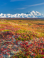 Landscape of autumn colored tundra with Mt Denali in the distance, Denali National Park, Alaska