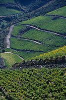 Europe/France/Languedoc-Roussillon/66/Pyrénées -Orientales/Banyuls-s-Mer: le vignoble de Banyuls et ses vignes en terrasses