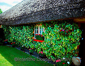 Tom Mackie, LANDSCAPES, LANDSCHAFTEN, PAISAJES, FOTO, photos,+6x7, building, buildings, chocolate box, cottage, cottages, dwelling, Eire, Europe, flower, flowers, geranium, home, horizont+al, horizontally, horizontals, house, houses, Ireland, Irish, ivy, medium format, residence, thatch, thatched roof, tradition+al, window, window box, windowbox, windows,6x7, building, buildings, chocolate box, cottage, cottages, dwelling, Eire, Europe+, flower, flowers, geranium, home, horizontal, horizontally, horizontals, house, houses, Ireland, Irish, ivy, medium format,+,GBTM030242-2,#L#, EVERYDAY ,Ireland