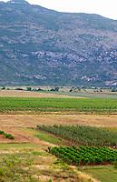 Vineyard on the plain flat land near just east of Mostar. Federation Bosne i Hercegovine. Bosnia Herzegovina, Europe.