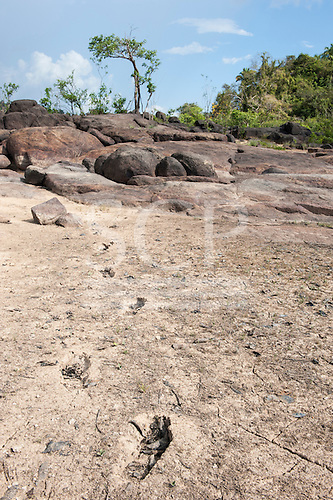 Xingu River, Para State, Brazil. The Volta Grande; Jericoá; dried earth, footprints.