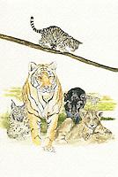 Familie van de katten