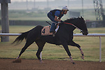 DUBAI,UNITED ARAB EMIRATES-MARCH 23: Stallwalkin' Dude,trained by David Jacobson,exercises in preparation for the Dubai Golden Shaheen at Meydan Racecourse on March 23,2017 in Dubai,United Arab Emirates (Photo by Kaz Ishida/Eclipse Sportswire/Getty Images)