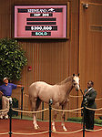 Hip #206 Tapit - Pure Symmetry colt, consigned by Denali Stud sold for $390,000 at the Keeneland September Yearling Sale.  September 11, 2012.