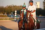 Csaba on post parade before the Fred Hooper Handicap (G3). Calder Race Course. Miami Gardens, Florida. 11-24-2012.  Arron Haggart/Eclipse Sportswire