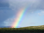 The rainbow at Venabygdsfjell in the Norwegian mountains on summer afternoon